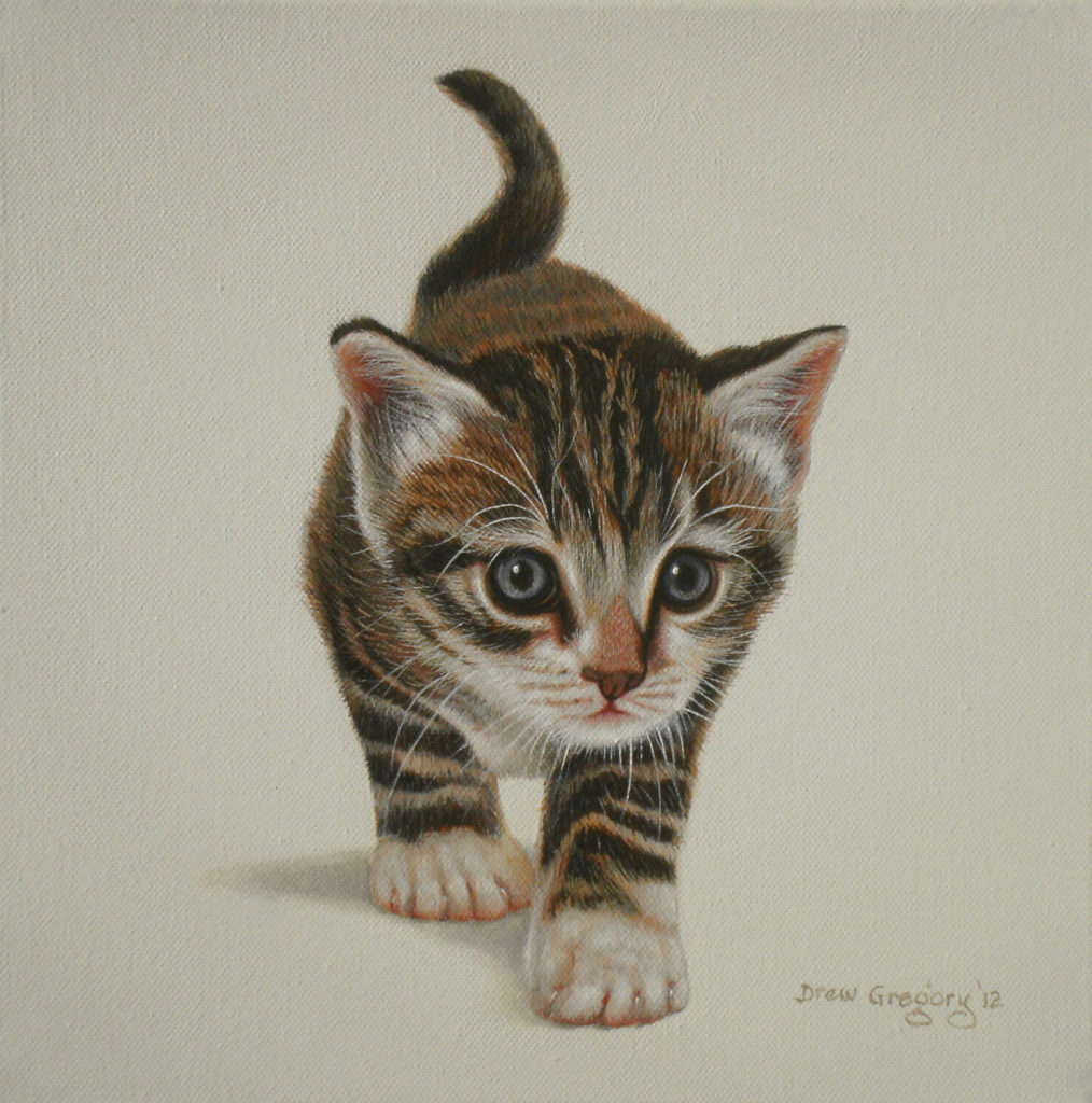 'Tabby Kitten 1' Oil on canvas 30 x 30cms Drew Gregory 2012
